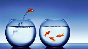 learning-organizations-fish-jumping